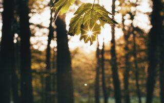 Waldlichtung, Sonne scheint durch ein Blatt